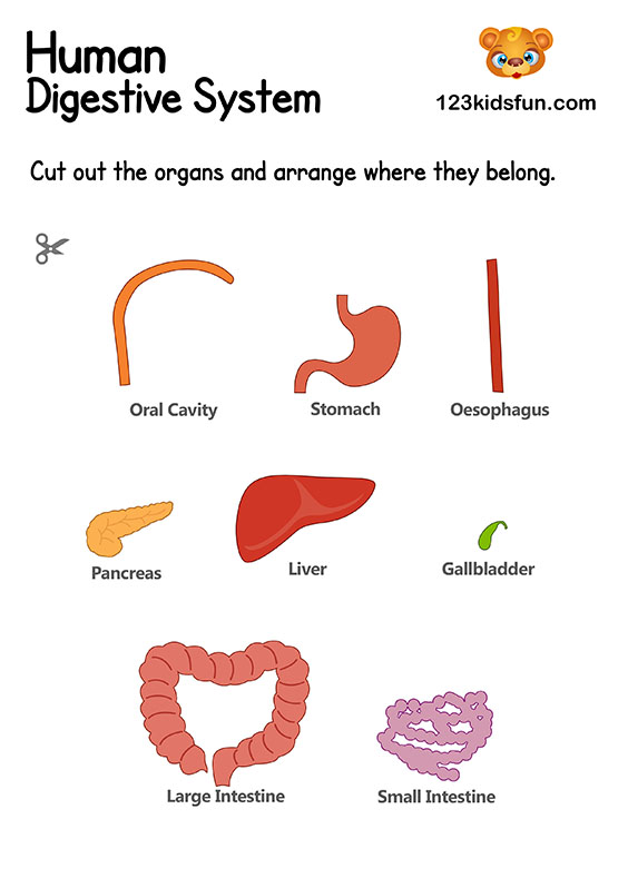 Digestive System - Human Body Systems for Kids Free Printables - Homeschooling