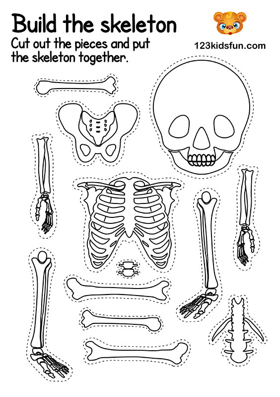 It's just a picture of Printable Skeletal System regarding human body