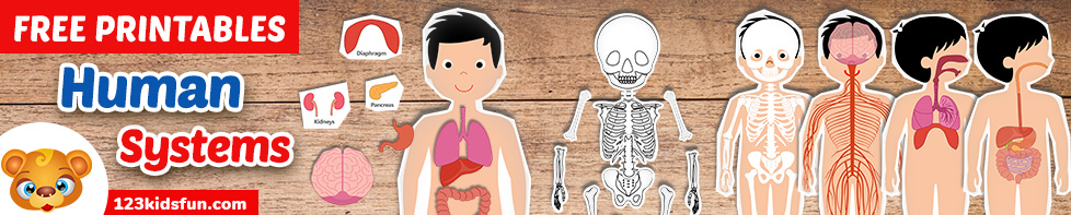 Human Body Systems for Kids Free Printables - Homeschooling